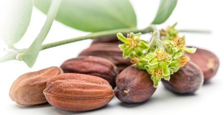 مزایای روغن جوجوبا: 7 راه باورنکردنی برای استفاده از آن برای داشتن پوست و مویی زیبا - ترنجان