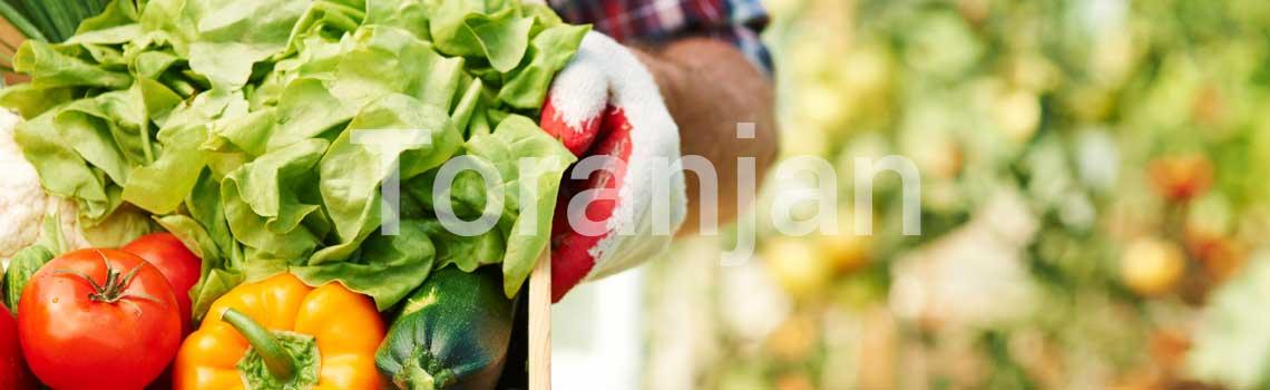 مواد غذایی و سمومی که بر علائم سرطان پوست تأثیر میگذارند - ترنجان