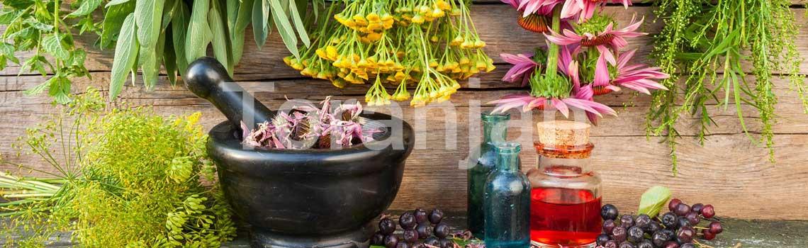 گیاهان دارویی - ترنجان