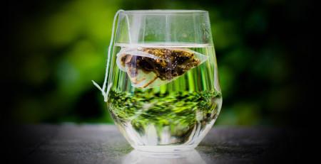 کاهش آکنه - 10 روش استفاده از چای سبز برای کاهش آکنه - ترنجان