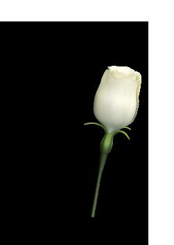 تصویر گل روی تیوب کرم دور چشم